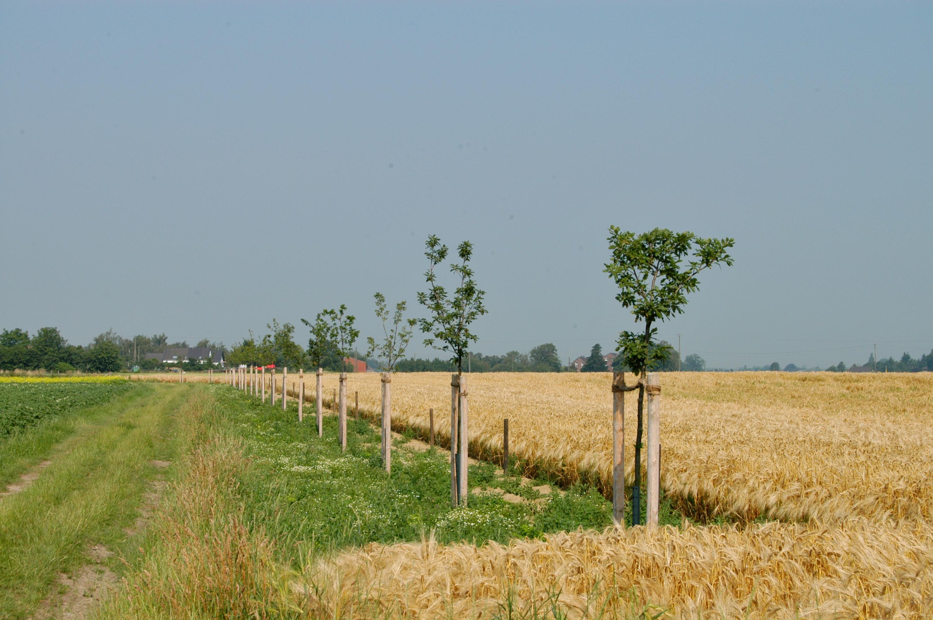 Landschaftspflanzung